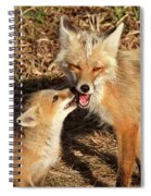 Red Fox Vixen With Pup On Hecla Island In Manitoba Spiral Notebook