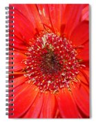 Red Gerber Daisy Spiral Notebook