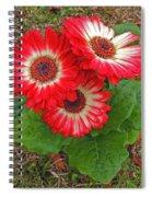 Red Gerbera Daisies Spiral Notebook