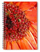Red Gerbera Daisy Spiral Notebook