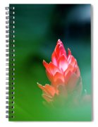 Red Ginger Spiral Notebook