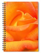 Red Gold Rose Spiral Notebook