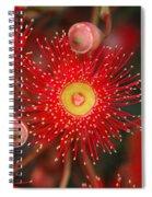Red Gum Flower Macro Spiral Notebook