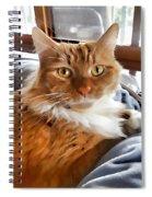 Red-haired Kitten Spiral Notebook