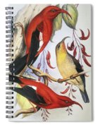 Red Hawaiian Honeycreeper Spiral Notebook