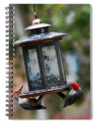 Red Head Wood Peckers On Feeder Spiral Notebook