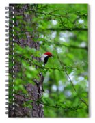 Red Headed Beauty Spiral Notebook