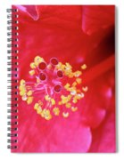 Red Hibiscus 3 Spiral Notebook