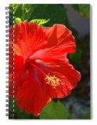 Red Hibiscus II Spiral Notebook