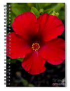 Red Hibiscus - Kauai Spiral Notebook
