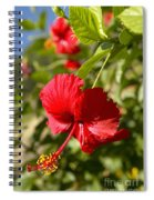 Red Hibiscus Spiral Notebook