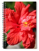 Red Hibiscus Square Spiral Notebook