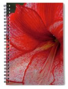 Red Hippeastrum Charisma Spiral Notebook