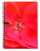 Red Hot Spiral Notebook