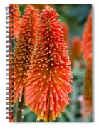 Red-hot Poker Flower Kniphofia Spiral Notebook