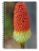 Red Hot Pokers Spiral Notebook