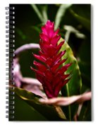 Red In The Forest Spiral Notebook