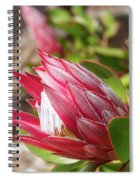 Red King Protea Bud Spiral Notebook