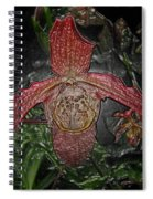 Red Lady Slipper Spiral Notebook