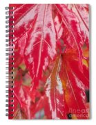 Red Leaf Abstract Spiral Notebook
