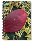 Red Leaf On  Arborvitae Leaves Spiral Notebook