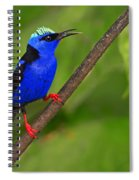 Red-legged Honeycreeper Spiral Notebook