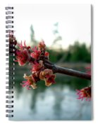 Red Maple Buds At Dawn Spiral Notebook