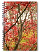 Red Maple Leaves And Branches Spiral Notebook