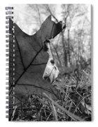 Red Oak Leaf Four Spiral Notebook