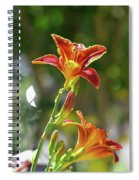 Red Orange Day Lilies I Spiral Notebook