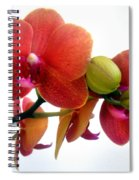 Red Orchid Flowers 02 Spiral Notebook
