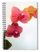 Red Pink Golden Orchid Flowers 03 Spiral Notebook