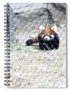 Red Panda Cub Spiral Notebook