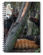 Red Panda Cubs At Play Spiral Notebook