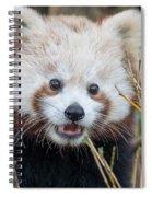 Red Panda Wonder Spiral Notebook