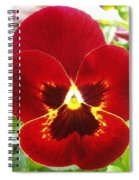 Red Pansy Spiral Notebook