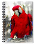 Red Parrot Spiral Notebook