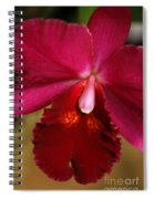 Red Passion Orchid Spiral Notebook
