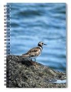 Ruddy Turnstone Spiral Notebook