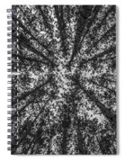 Red Pine Tree Tops In Black And White Spiral Notebook