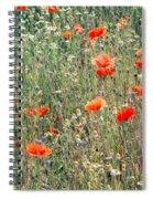 Red Poppies In A Summer Sun Spiral Notebook