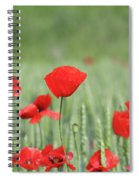 Red Poppy Flower And Green Wheat Nature Spring Scene Spiral Notebook