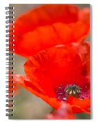 Red Poppy For Remembrance Spiral Notebook
