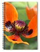 Red Poppy I Spiral Notebook