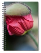 Red Poppy Sneaking Out Spiral Notebook