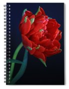 Red Princess Tulip On Blue Spiral Notebook