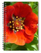 Red Red Bloom Spiral Notebook
