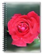 Red-red Rose. Spiral Notebook