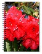 Red Rhodie Spiral Notebook