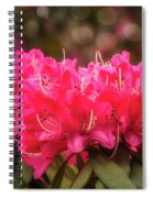 Red Rhododendron Flowers At Floriade, Canberra, Australia. Spiral Notebook